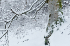 Snø i Aukraskogen