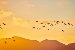 Morgenfugler