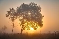 Oterhalsen  - Tre i soloppgang