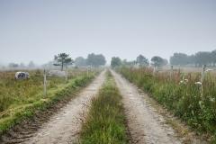 Veien i Oterhalsen - Tåke