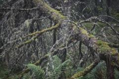 Gammel skog