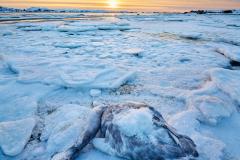 Vinter på Røaleira - Død svane