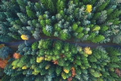 Aukraskogen fra Lufta