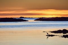 Rindarøya - Hegre