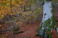 Aukraskogen - Haust