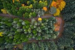 Haustvegen - Aukraskogen