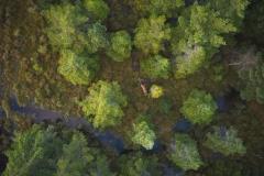 Hjort - Dronefoto